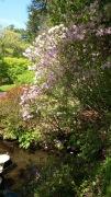Az Garden 1